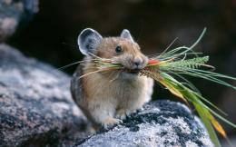 Rat HD Wallpaper | Rat Photos, Pictures | Cool Wallpapers 852