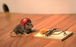 Funny Mouse Animal Wallpaper HD #3188 Wallpaper | High Resolution 794