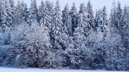 Winter Forest Wallpaper Background 2560x1440 1588