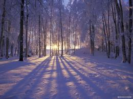 Wallpaper – Free Nature wallpaper – Winter Wonderland 1 wallpaper 829