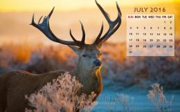July Calendar Wallpaper 2016 781