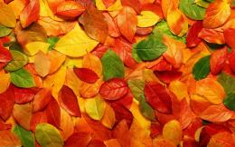 AUTUMN LEAVES BACKGROUND 523