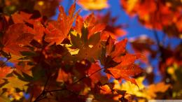 wallpaper leaves autumn bright desktop images 1920x1080 1412