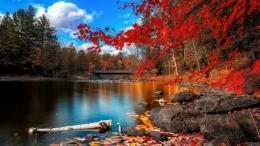 Autumn Leaves Desktop Wallpapers 1544