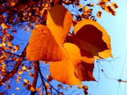 :wallpaperstock net autumn leaves wallpapers 13058 1600x1200 1 html 953