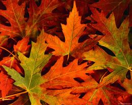 fall leavesAutumn Photography Desktop Wallpapers55759 Views 500