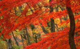Autumn Leaves Desktop Wallpaper Fall leaves desktop 468