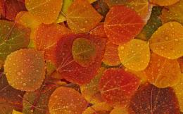 2560x1600 Fall Leaves desktop PC and Mac wallpaper 568