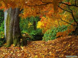 autumn leaves desktop wallpaper 1490