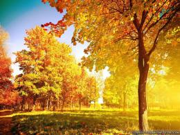 Autumn Trees Pictures HD Wallpaper 11 995