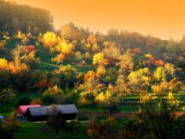 amazing autumn trees wide high definition wallpaper for desktop 708
