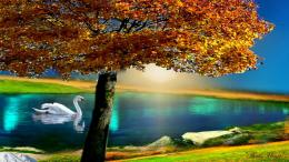 Autumn tree colors lake fall beautiful swan HD Wallpaper 1070