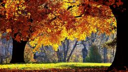 trees forest autumn wallpaper cartoon wallpapers 2560x1440 mrwallpaper 941