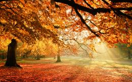 Autumn Trees Sun Light HD Wallpaper 1121