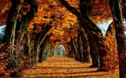 Autumn Wallpaper hd WidescreenHD Wallpapers 1021