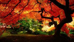 autumn tree HD Wallpaper 1920x1080 Beautiful autumn tree HD Wallpaper 292