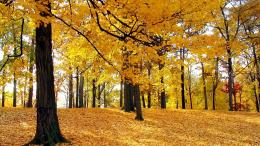 Autumn Trees Hd Wallpapers Background Full Hd1600x900 iWallHD 915