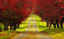 Red Trees Autumn Road HD Wallpapers 1549