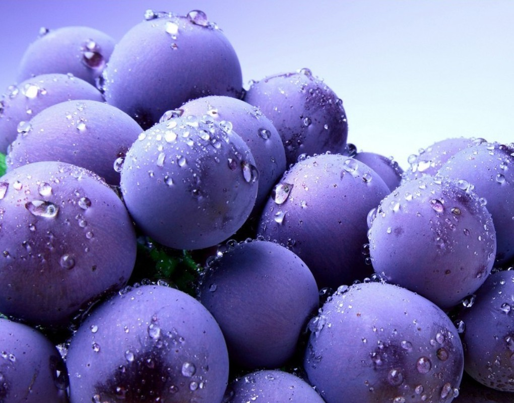 Blueberry Sweats Wallpaper HD wallpapersBlueberry Sweats Wallpaper 1784