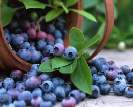 Fruits Blueberries Green Leafy HD Wallpapers 1919