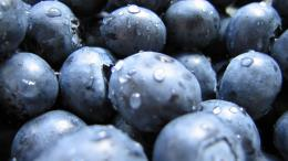 Blueberry closeup jpg 1250