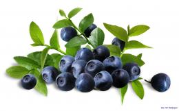 Blueberry HD Wallpapers 1775