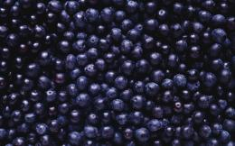 food blueberries high definition wallpaper for desktop background 1964