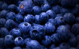Sweet Blueberry HD wallpapersSweet Blueberry 992