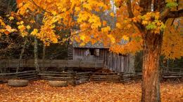 Cabin In Autmn Leaves Wallpapers 350
