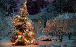 Wallpaper Magic Christmas tree1440 x 900 widescreenDesktop 1946