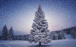 Snowy Christmas Tree HD Wallpapers 769