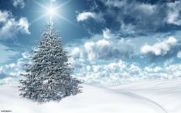 Christmas Tree Facts & Gallery 112