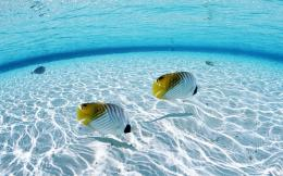 Clear Water Desktop Wallpaper | Clear Water Photo | Cool Wallpapers 1833