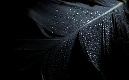 Wallpaper feather, clean, drops, water desktop wallpaper » Other 1752