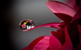 Crystal clear water drops wallpaper 1920x1200 hd wallpaper desktop 978