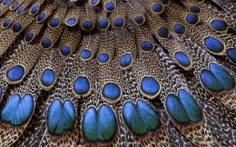 Feathers HD Wallpapers 475