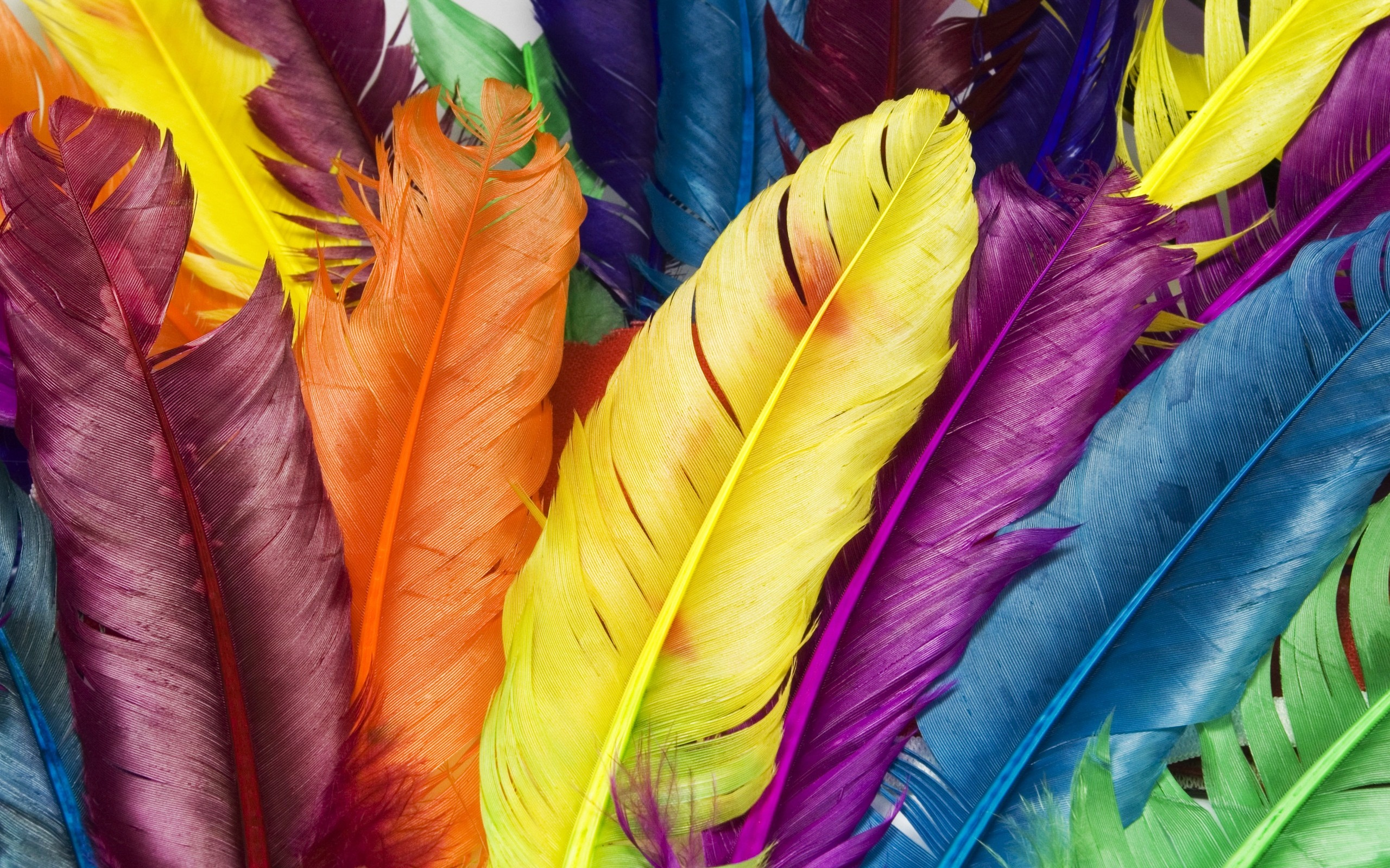 Feathers in Colors 520