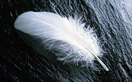 feathers desktop wallpapers feathers hd wallpaper green feather top hd 791