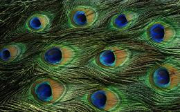 wallpapers feathers hd wallpaper green feather top hd wide wallpaper 1906