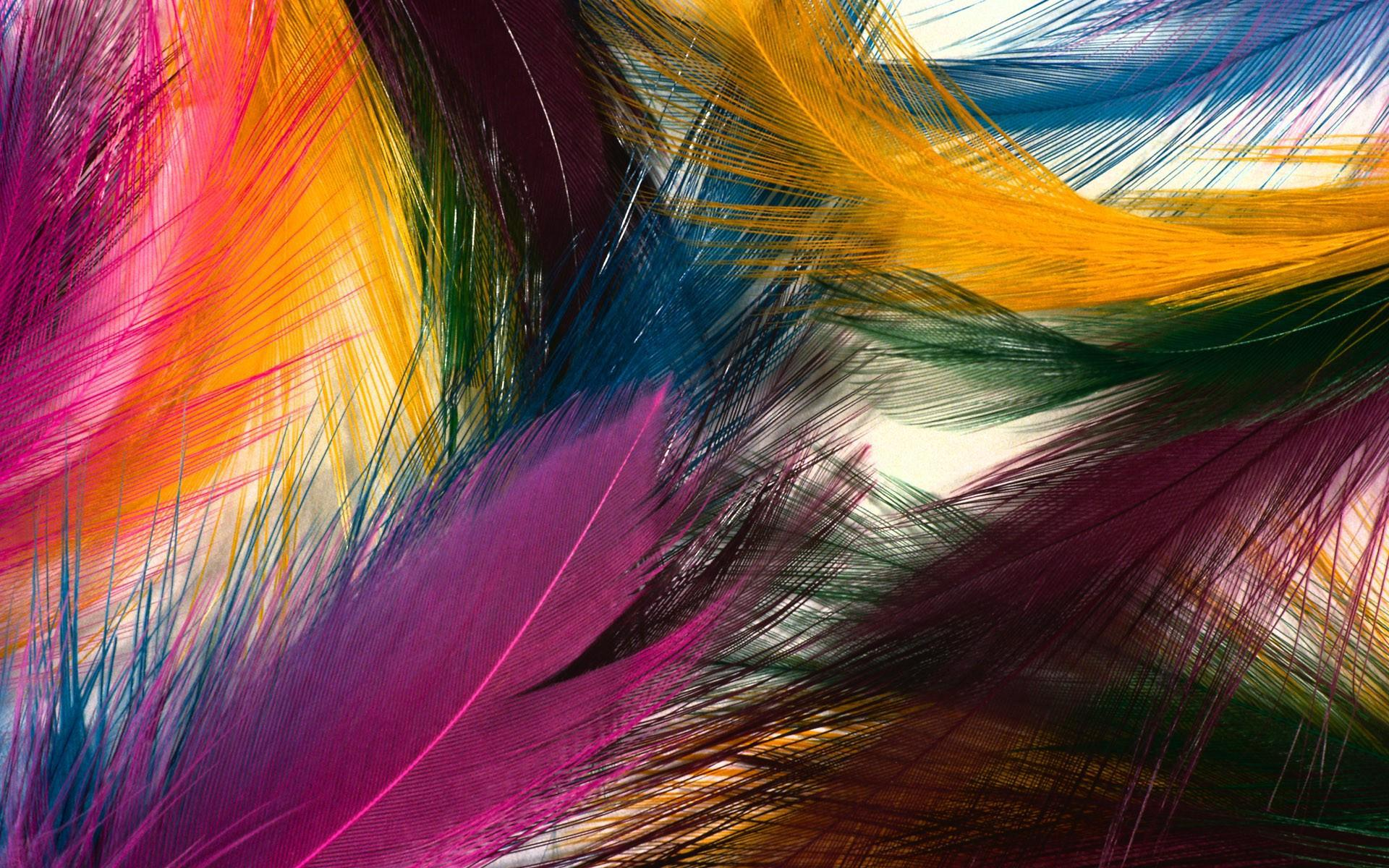 Download Colorful Feather HD wallpaper 573