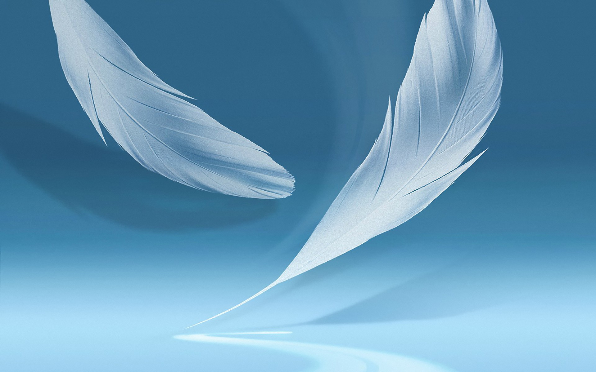 feather wallpapers 1338
