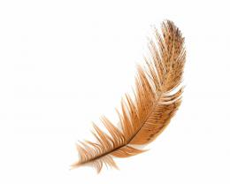 Feather Hd Desktop Wallpaper | Free White Feather Wallpaper | Download 1406