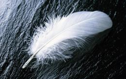 White feather HD Wallpaper 840