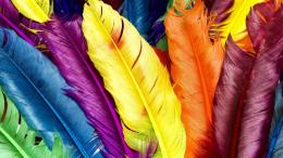 HD Wallpapers Colorful Feathers 540x303 1366x768 HD Wallpapers 1223