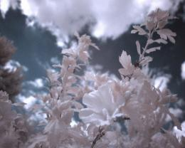 1280x1024 Infrared Flowers desktop PC and Mac wallpaper 202