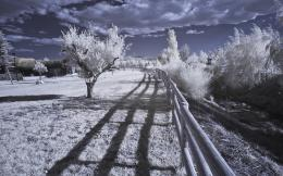 Infrared Desktop Wallpapers 1008