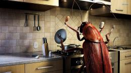 Funny Bug Kitchen Cooking P O Manipulation Desktop X Hd Wallpaper 1937