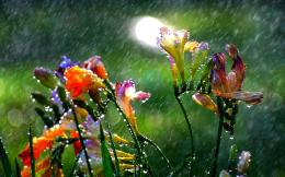 Summer Rain Desktop Wallpapers 504
