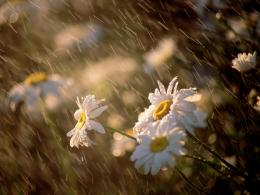 summer rain on the flowers hd wallpaper download summer rain images 437