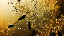 summer rain hd wallpaper for desktop background download summer rain 1267
